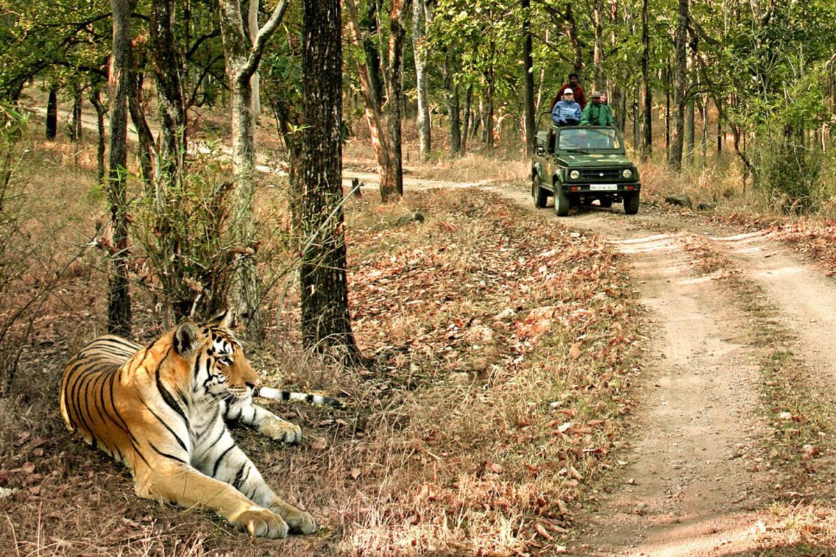 Bandhavgarh-National-Park-Safaris