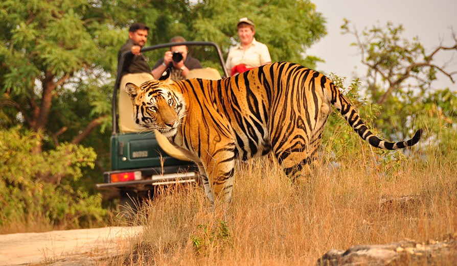10N/11D India Wildlife Luxury Tour with Taj Safari Lodges