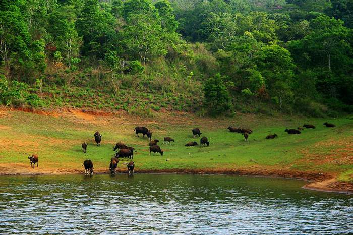 wildlife-sanctuary-of-Periyar